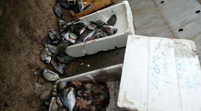 Çanakkale'de kaçak avlanan balıklar imha edildi
