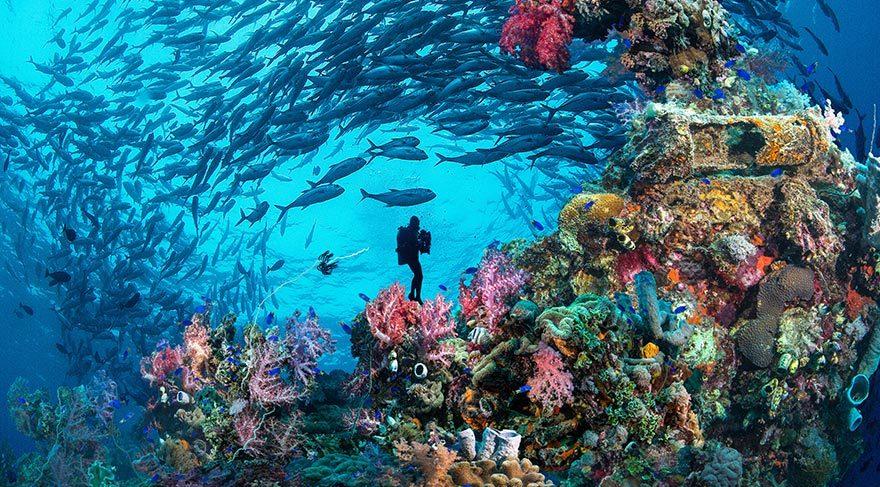 Kızıldeniz'in renkli su altı dünyası