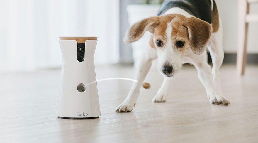 Furbo, siz yanında değilken köpeğinizi takip edebilmenize olanak sağlıyor!