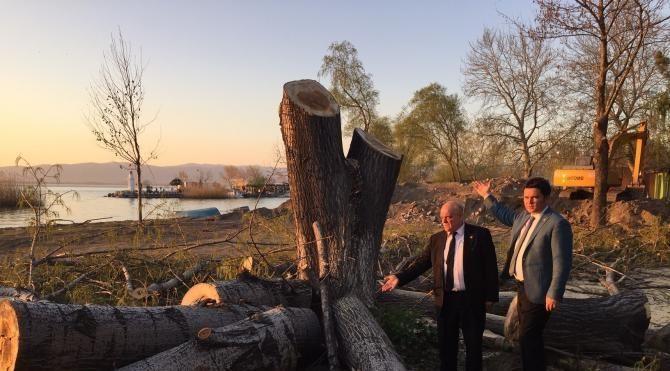 CHP'li Aydın'dan İznik Gölü kıyısında ağaç kesimine tepki