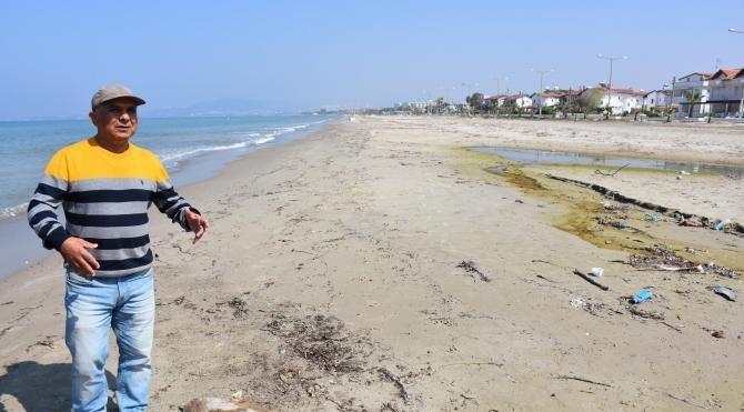 Kuşadası Körfezi'nde bir ayda üçüncü yunus öldü