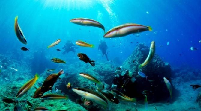 Dalış turizminde yüzde 100 artış bekleniyor