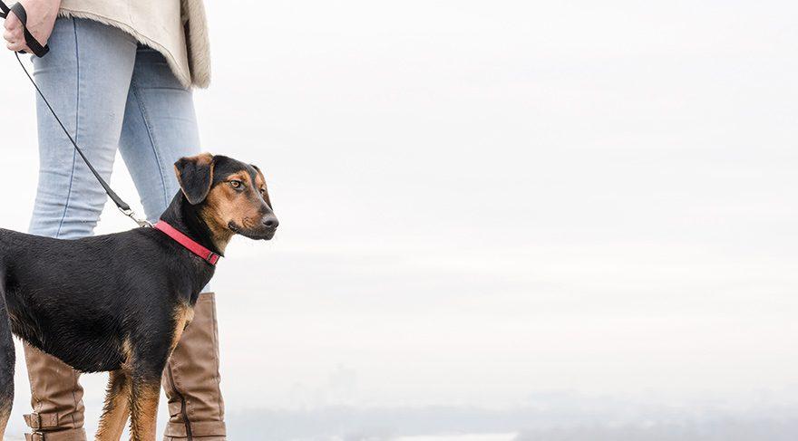 Bu köpekler diyabet hastaları için eğitiliyor