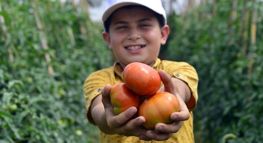 Meğerse Ruslar Türk domatesi yiyormuş