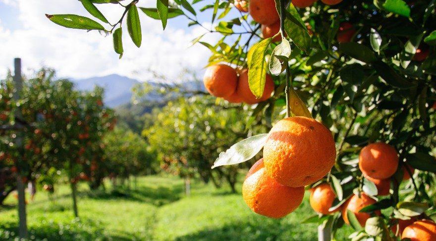 Hollandaya Neden Portakallar Deniyor Güncel Haberler