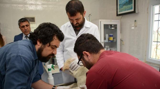 Türkiye'de bir ilk, sokak hayvanları, kan testi sonrası aşıyla korunacak