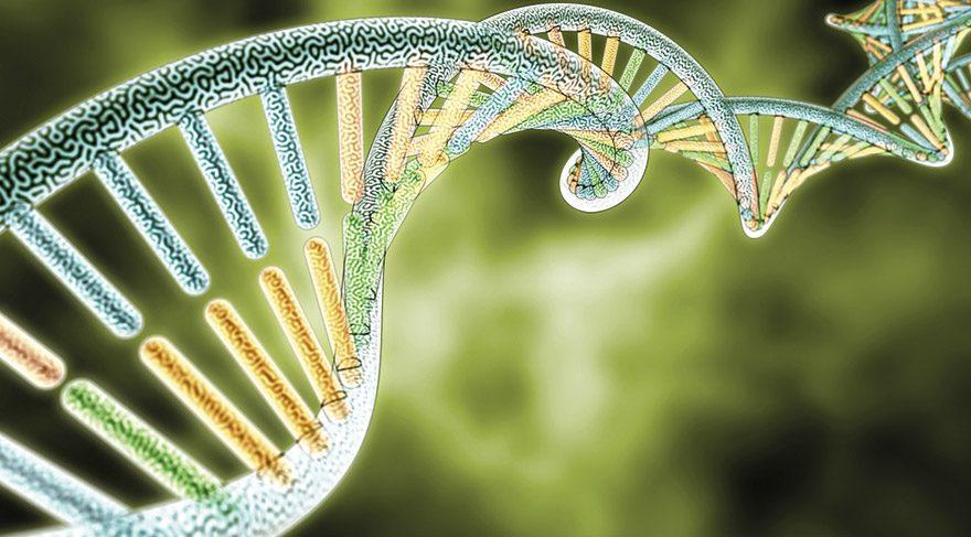 Obezite geni zayıflamayı engeller mi?
