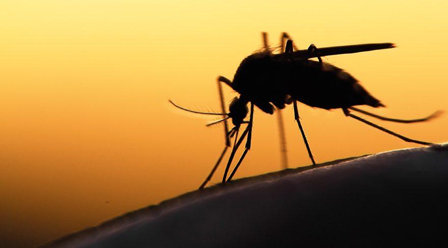 Sivrisinekten bulaşıyor, dünyanın yarısını tehdit ediyor