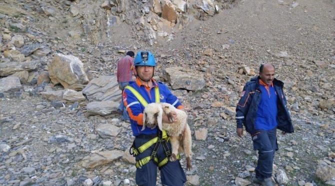 40 metre yükseklikte mahsur kalan kuzuyu AFAD kurtardı