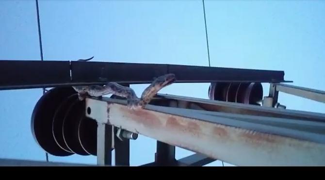 Akıma kapılan yılan 12 köyü 15 saat elektirksiz bıraktı