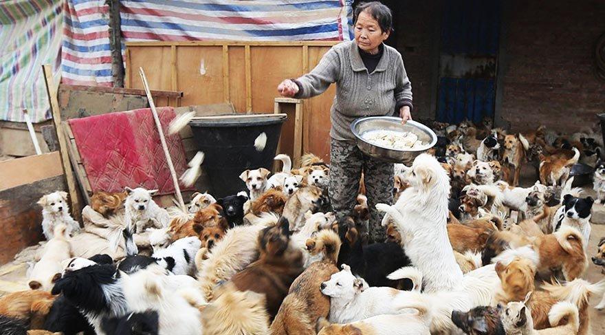Çin'de 1300 köpeğe gönüllü olarak bakan yüce kadınlar