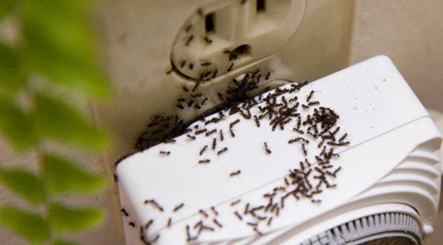 Karıncaları evinizden kovmanın doğal yöntemleri! – Sözcü Gazetesi