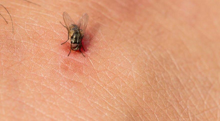 Sivrisinek ısırığı evliliğini kabusa çevirdi!