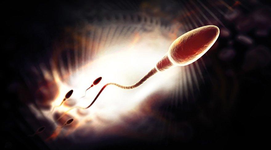 Tüp bebekte yeni keşif: Sperm radarı