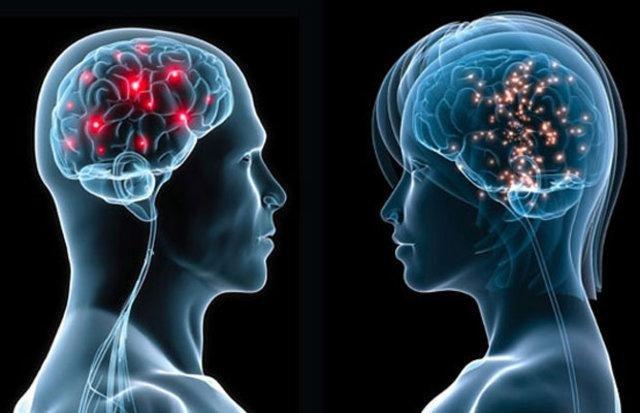 beyin resim ile ilgili görsel sonucu