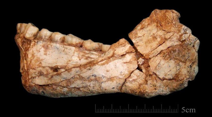 Bilim dünyasını sarsan 300 bin yıl yaşındaki Homo Sapiens'in ne yediği ortaya çıktı