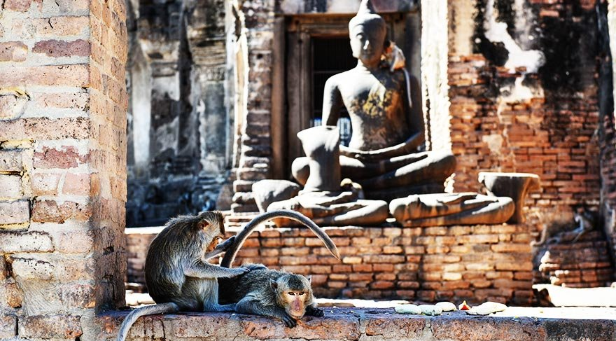 Tayland'ın makak tapınağı