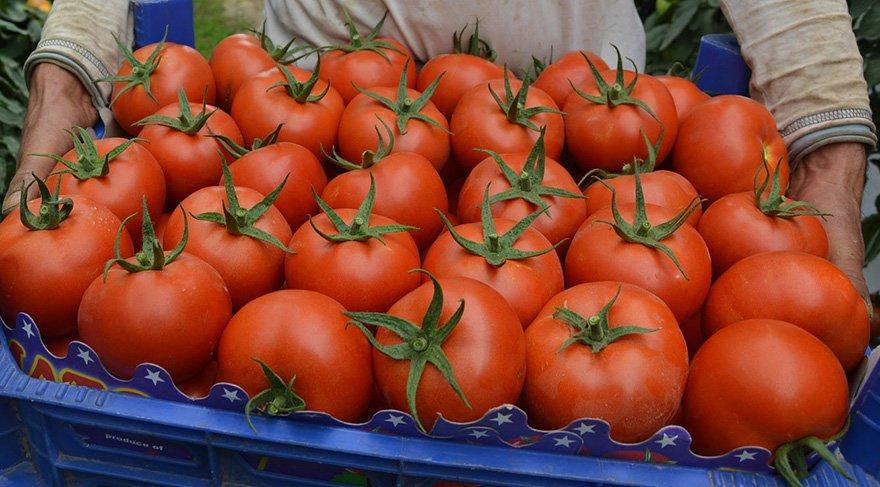 Rusya ile domates görüşmeleri 18 Ağustos'ta