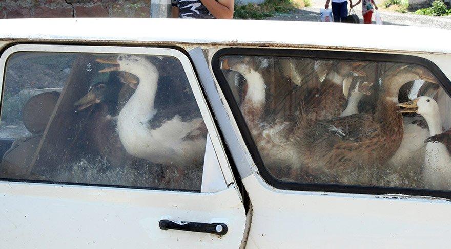 Ardahan'da alarm... Kümes hayvanları itlaf ediliyor