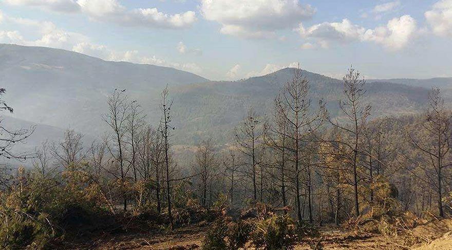 İzmir'deki orman yangınında 500 hektar zarar gördü
