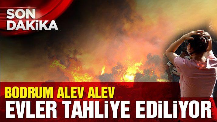 Bodrum'da sit alanında yangın çıktı