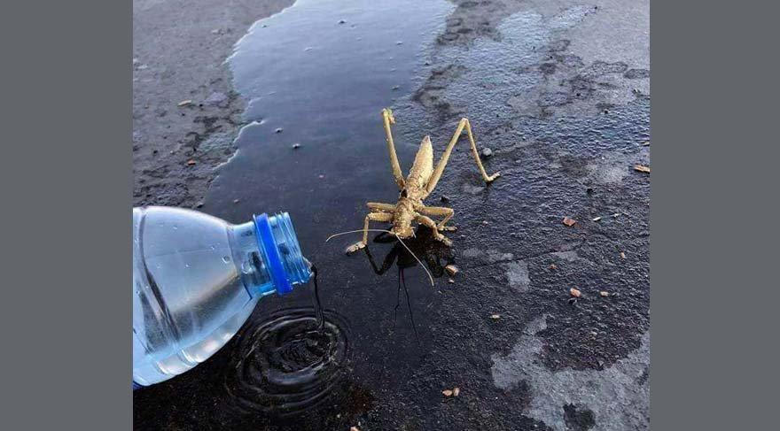 Irak sınırında bitkin düşen çekirgeye can suyu