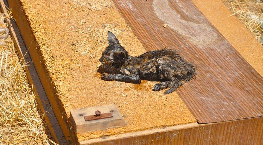 Yavru kediyi 3 gün sonra itfaiye kurtardı