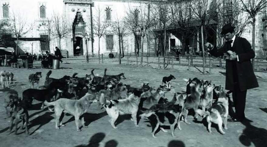'Dört Ayaklı Belediye: İstanbul'un Köpekleri' sergisi