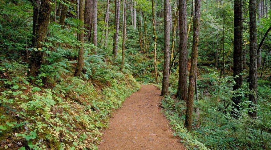 3 ay boyunca ormanlara girmek yasaklandı