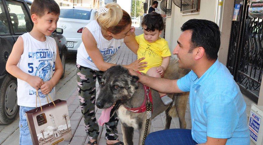İşkence gören sokak köpeği doğal ortamına bırakıldı