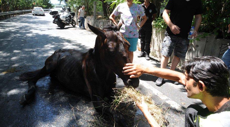 Sarıyer'de at kurtarma operasyonu