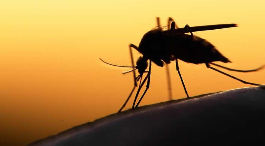En çok ölüme neden olan canlı: Sivrisinekler