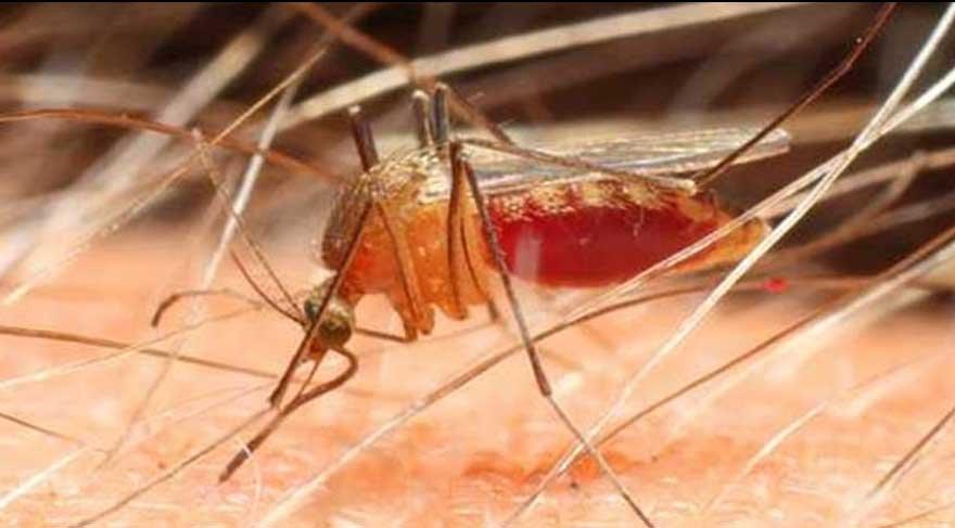 Sivrisinekler kimyasal kullanmadan nasıl uzaklaştırılır?