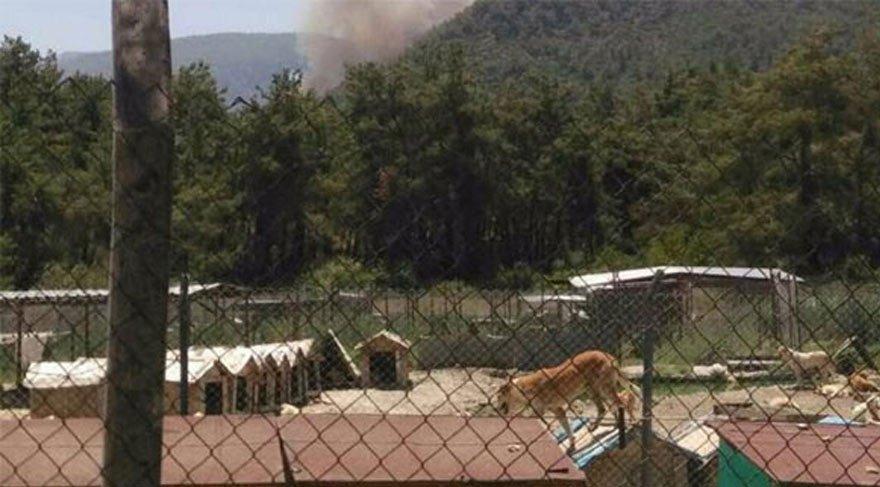 İzmir'deki yangın binlerce hayvanı tehdit ediyor!