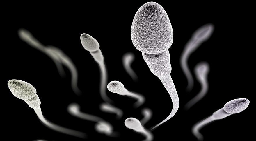 Korkutan araştırma… Sperm sayısı azalıyor