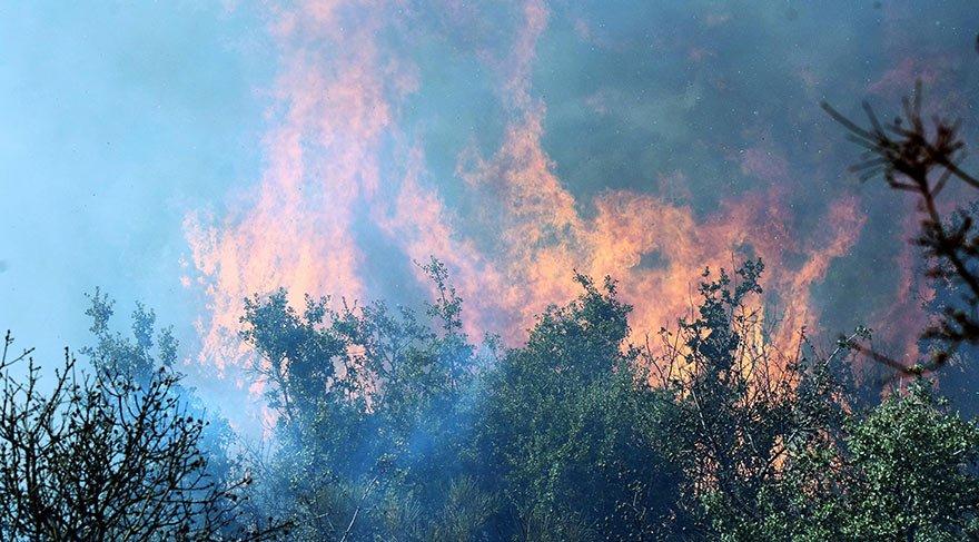 Sosyetenin tatil cenneti Göltürkbükü'nde korkutan yangın
