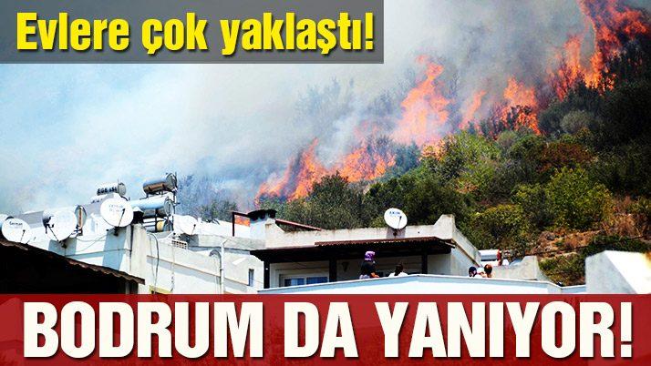 Hektar hektar yanan ormanlar artık daha fazla yanmaz.