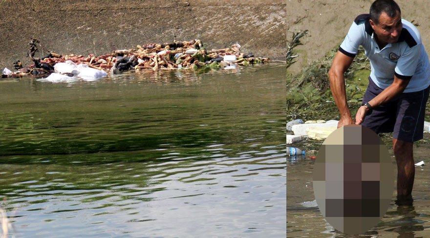 At ve eşekleri kesip kemiklerini sulama kanalına attılar