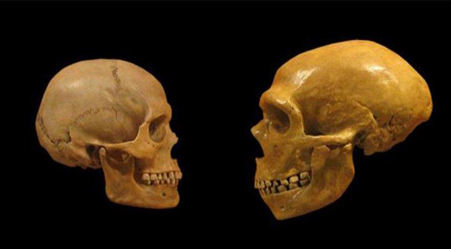 Arkaik DNA analizleri, Neanderthal, Denisovan ve modern insan evriminin hikayesini tekrar yazıyor