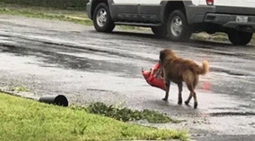 Dünya o köpeğin aklına hayran kaldı