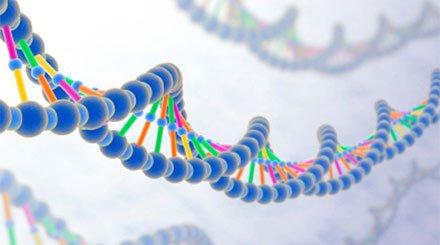genetik-2