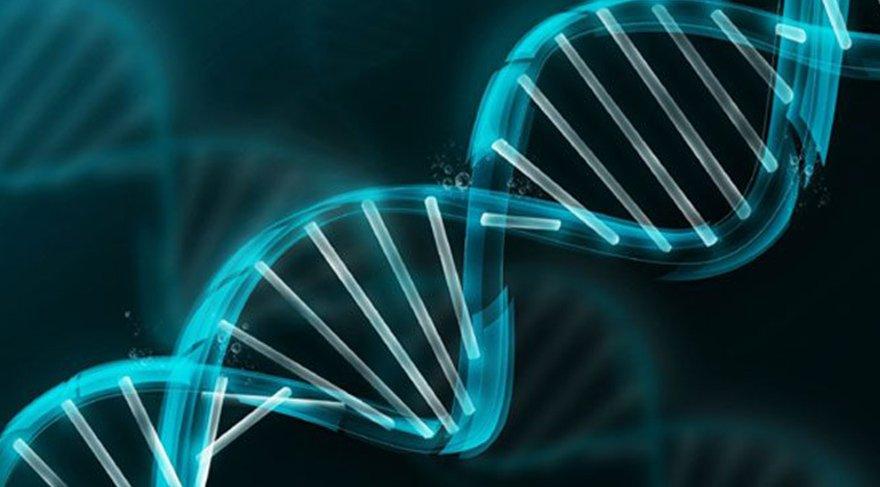 Ders programını DNA belirleyecek!