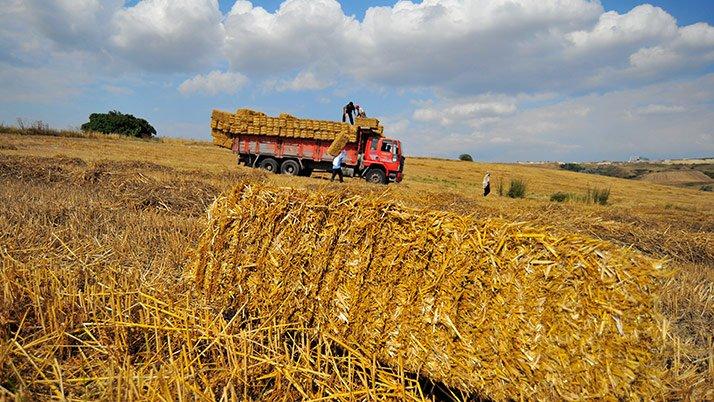 Türkiye beş yıl sonra saman ithal ediyor