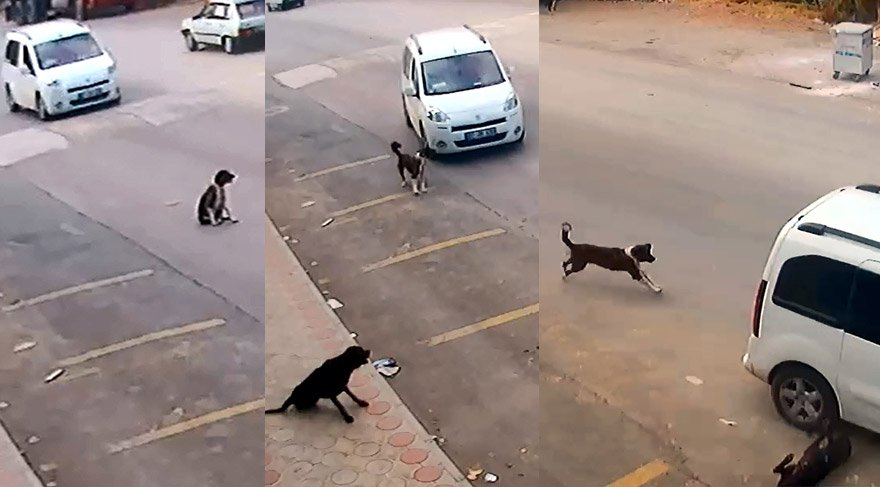 Bilerek köpeği ezip kaçtı! Bunun adı vahşet…