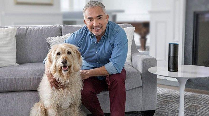 Köpekler için sesli kitap var, peki ne işe yarıyor?