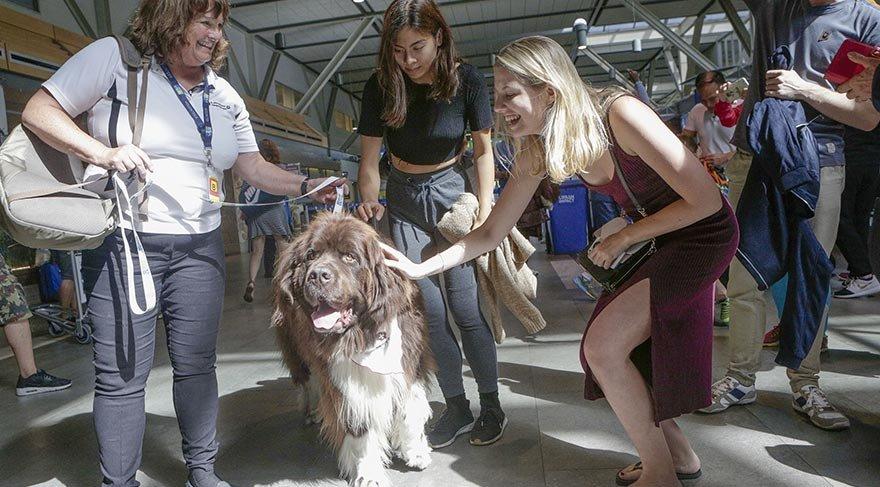 Uçaktan korkanlara köpek terapisi