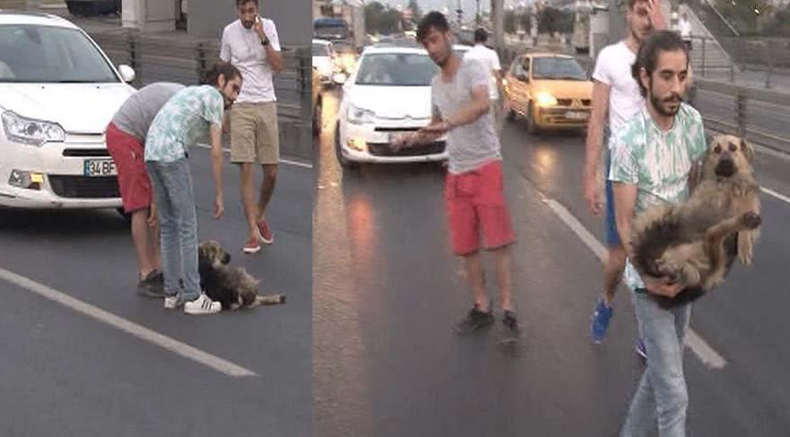 D-100'deki yaralı köpeğe yardım eli