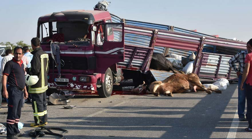 Kurbanlık taşıyan kamyon yolcu otobüsüne çarptı!