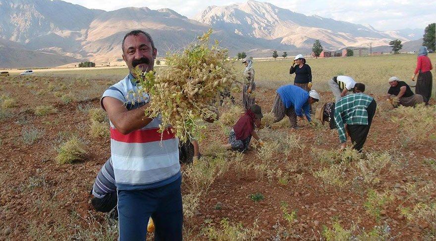 Ovacık'ta 'su' sudan ucuz, ulaşım ücretsiz - Son dakika haberleri