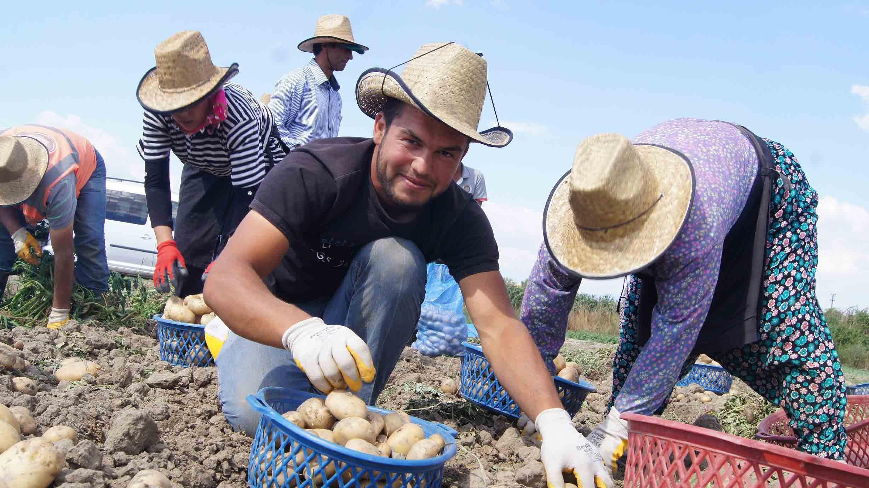 Akıllı Köy'de patates denemesi başarıyla sonuçlandı